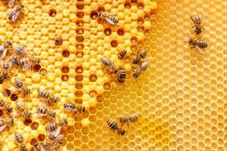 Productive bees in a hive. Credit: https://www.istockphoto.com/au/portfolio/natali_mis