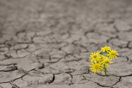 Flowers growing through a barren landscape. Credit: https://www.istockphoto.com/au/portfolio/flyparade