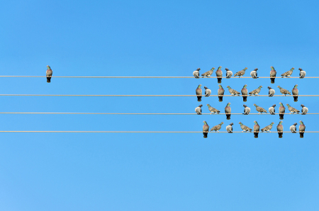 A bird sitting as an outlier from the flock. Credit: https://www.istockphoto.com/au/portfolio/ognjeno