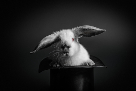 Rabbit emerging from a magician's hat. Credit: Rafinade